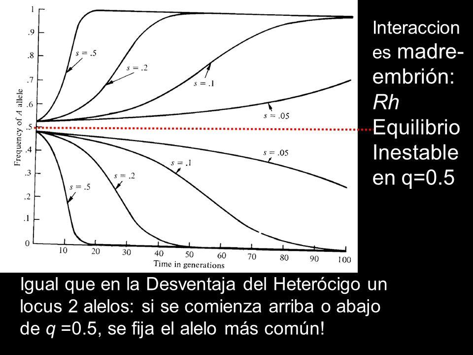 Equilibrio Inestable en q=0.5 Interacciones madre-embrión: Rh