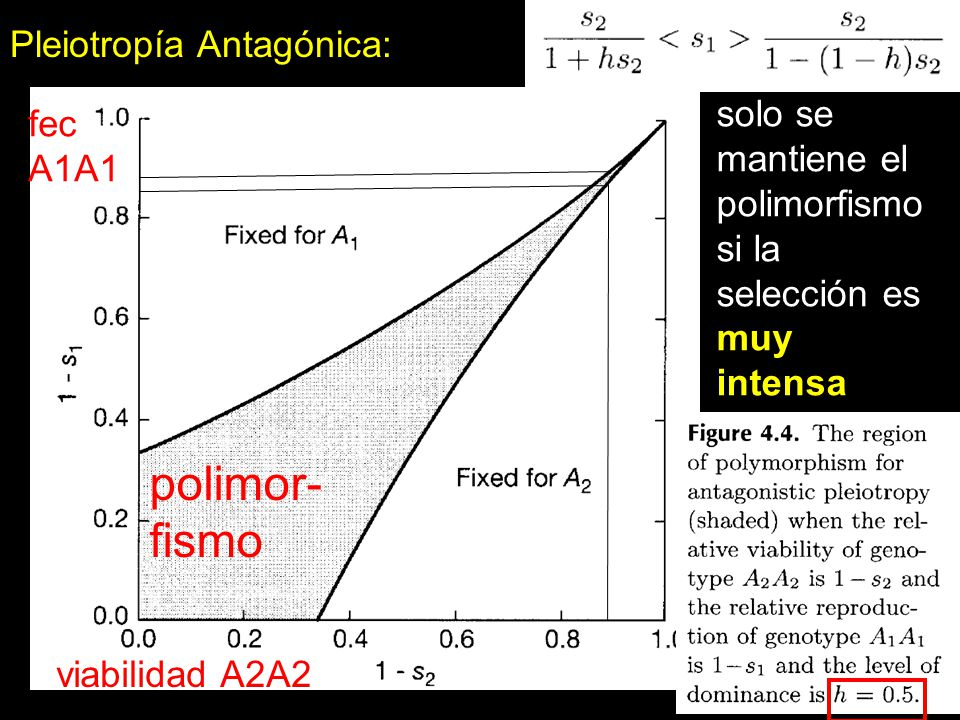 polimor- fismo Pleiotropía Antagónica: