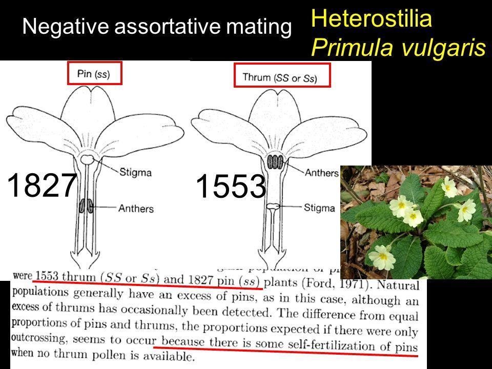 Heterostilia Primula vulgaris Negative assortative mating 1827 1553