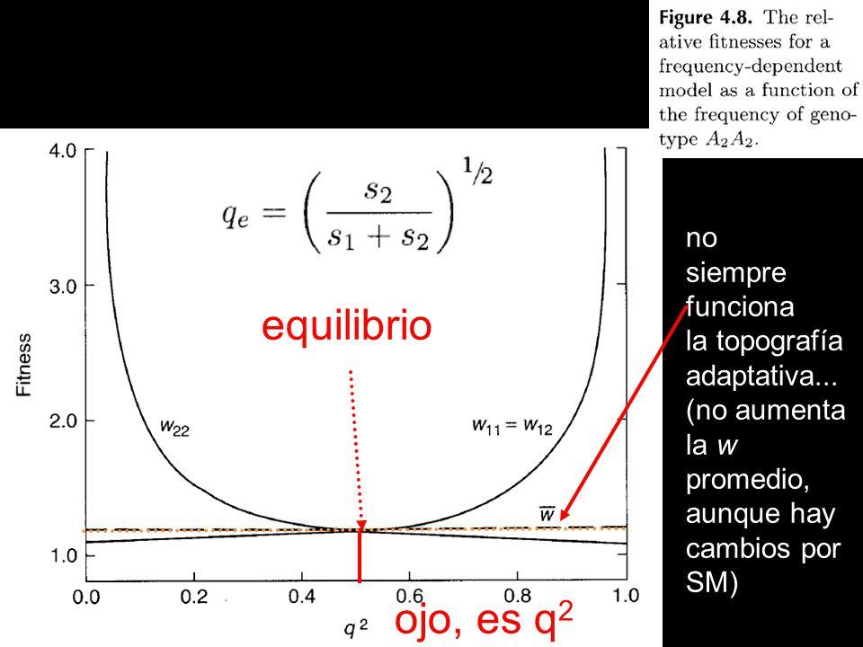 equilibrio ojo, es q2 no siempre funciona la topografía adaptativa...