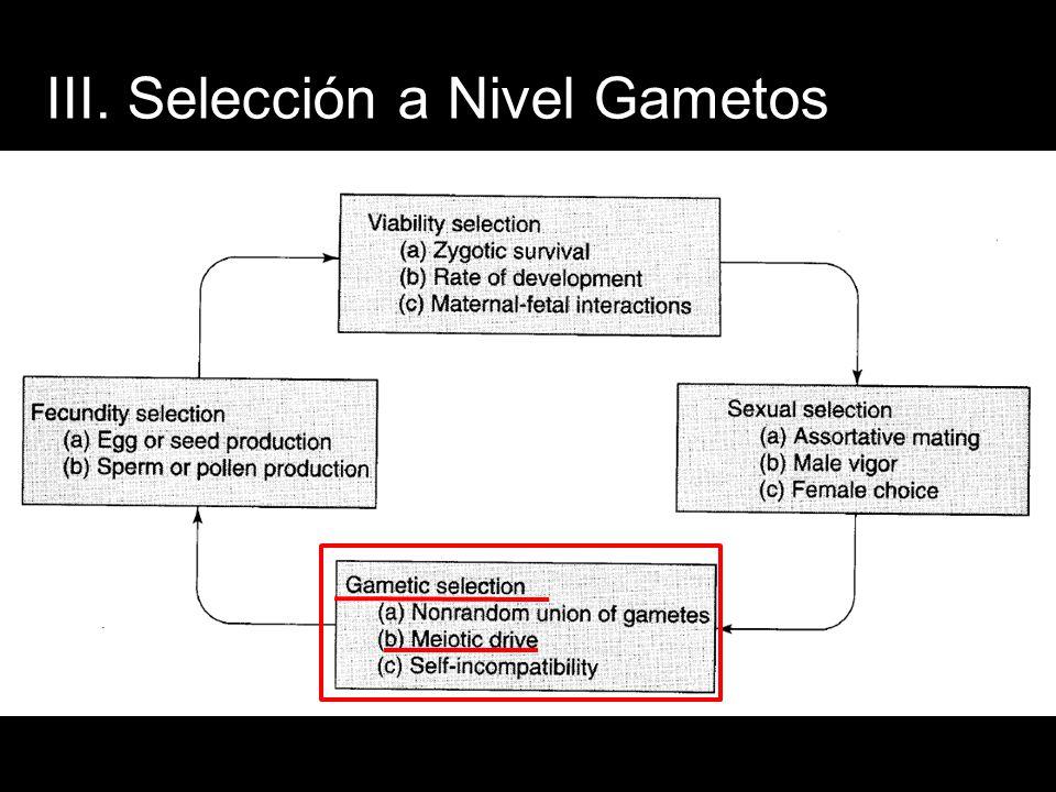 III. Selección a Nivel Gametos