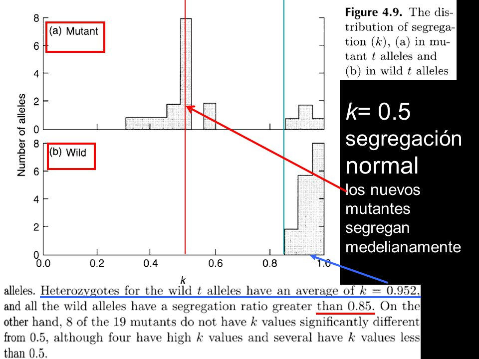 k= 0.5 segregación normal los nuevos mutantes segregan medelianamente