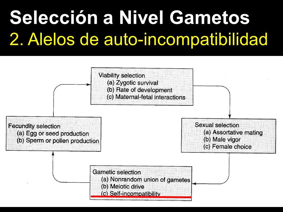 Selección a Nivel Gametos