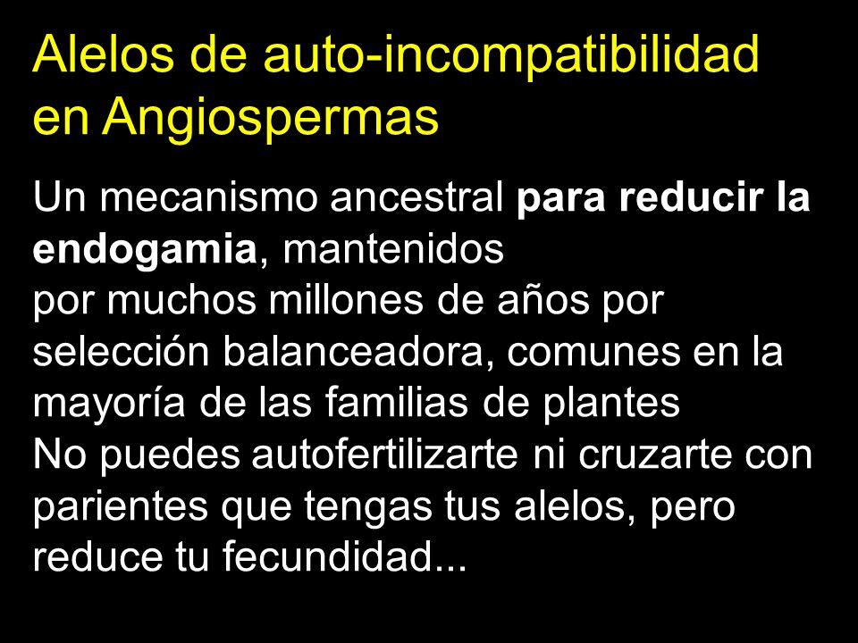 Alelos de auto-incompatibilidad en Angiospermas