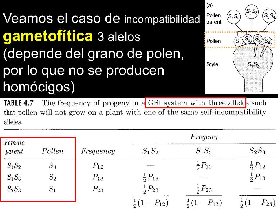 gametofítica 3 alelos Veamos el caso de incompatibilidad