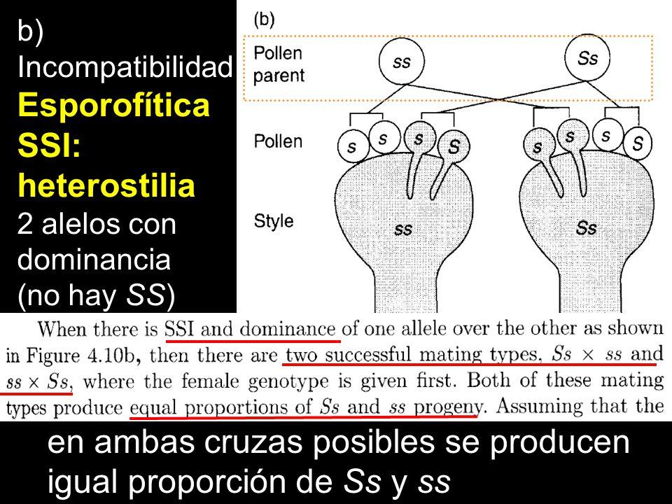 en ambas cruzas posibles se producen igual proporción de Ss y ss