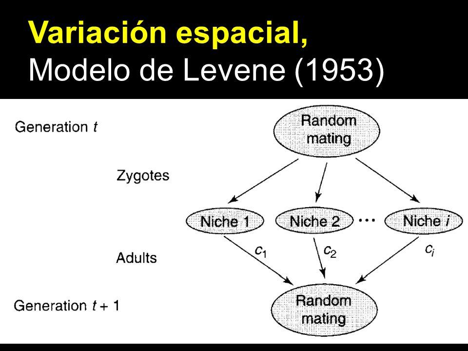 Variación espacial, Modelo de Levene (1953)