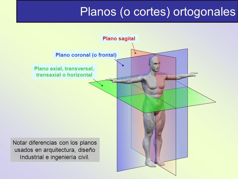 Planos (o cortes) ortogonales