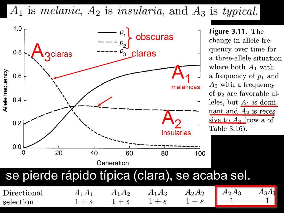A3claras A1 A2 se pierde rápido típica (clara), se acaba sel. obscuras