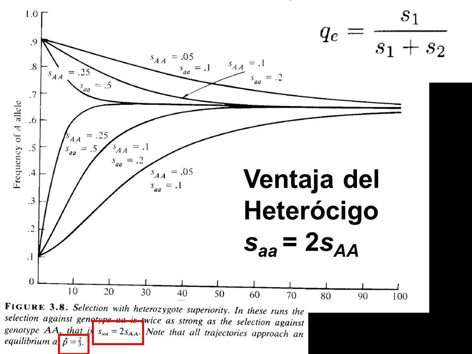Ventaja del Heterócigo saa = 2sAA