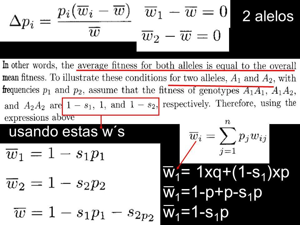 2 alelos usando estas w´s w1= 1xq+(1-s1)xp w1=1-p+p-s1p w1=1-s1p