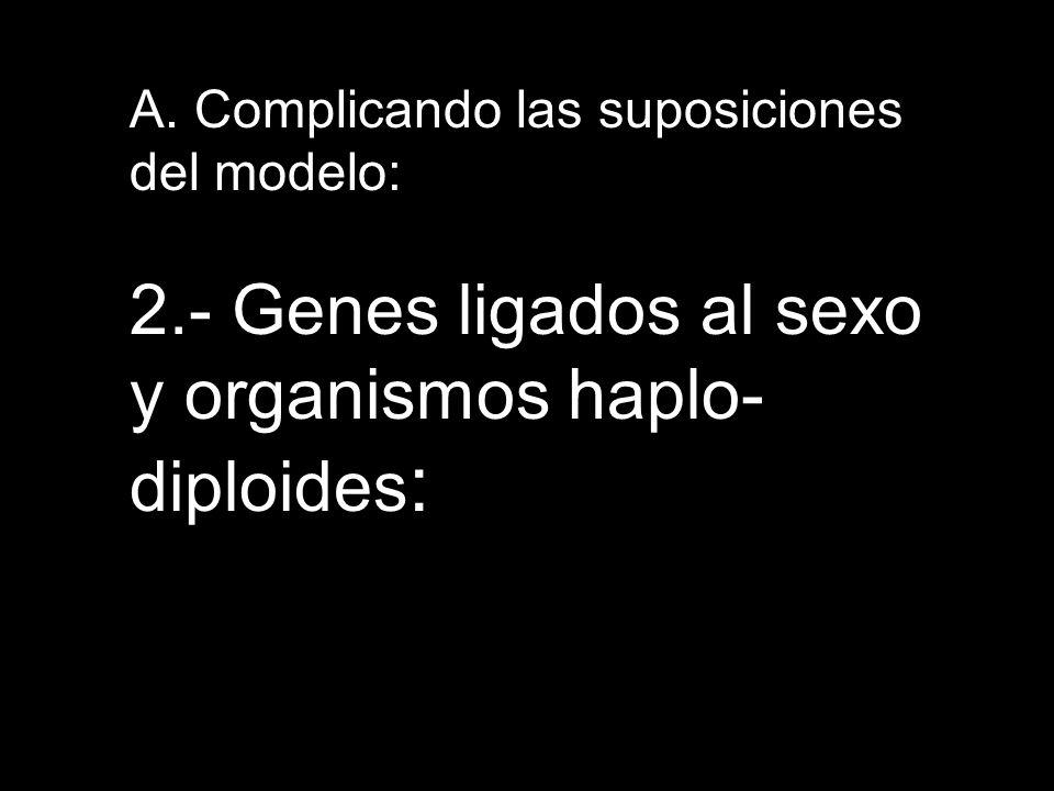 2.- Genes ligados al sexo y organismos haplo-diploides: