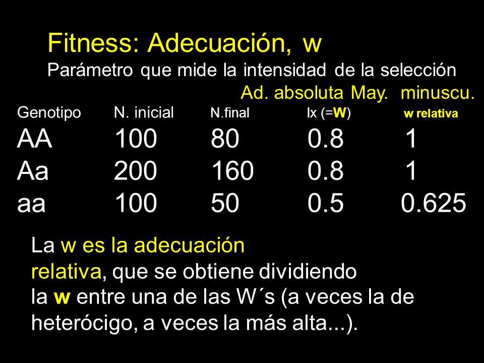 Fitness: Adecuación, w AA 100 80 0.8 1 Aa 200 160 0.8 1