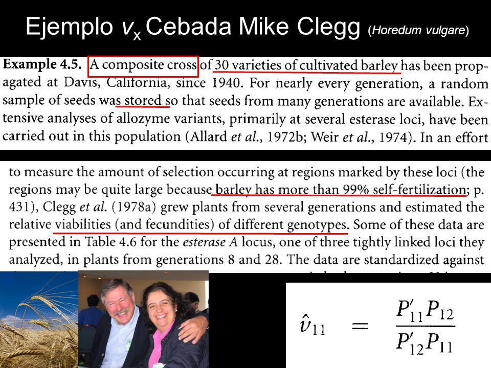 Ejemplo vx Cebada Mike Clegg (Horedum vulgare)