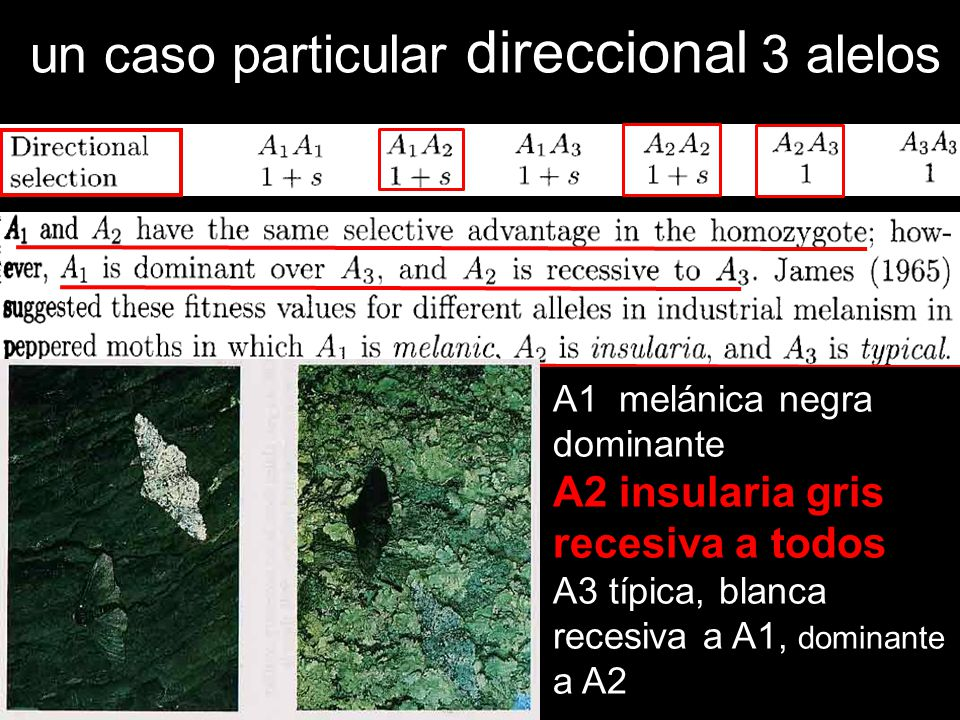 un caso particular direccional 3 alelos