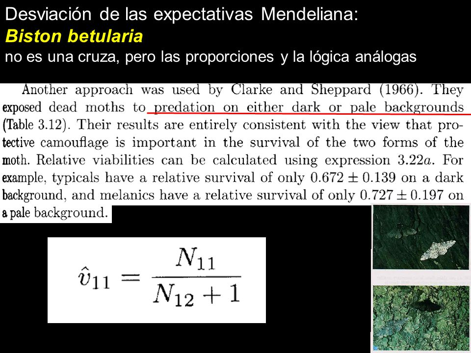 Desviación de las expectativas Mendeliana: Biston betularia