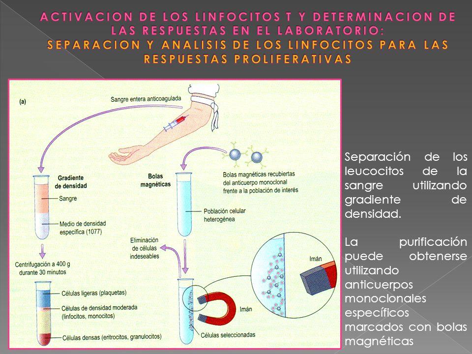 ACTIVACION DE LOS LINFOCITOS T Y DETERMINACION DE LAS RESPUESTAS EN EL LABORATORIO: SEPARACION Y ANALISIS DE LOS LINFOCITOS PARA LAS RESPUESTAS PROLIFERATIVAS