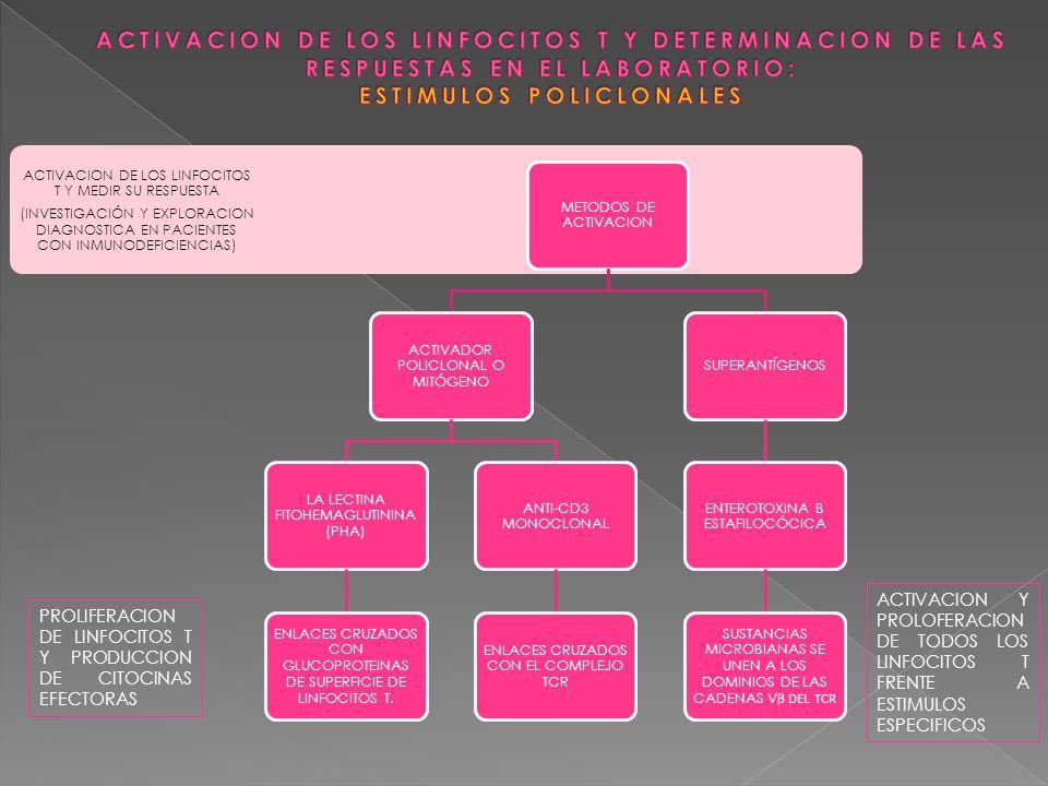ACTIVACION DE LOS LINFOCITOS T Y DETERMINACION DE LAS RESPUESTAS EN EL LABORATORIO: ESTIMULOS POLICLONALES