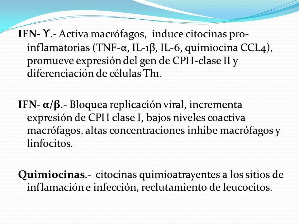 IFN- ϒ.- Activa macrófagos, induce citocinas pro-inflamatorias (TNF-α, IL-1β, IL-6, quimiocina CCL4), promueve expresión del gen de CPH-clase II y diferenciación de células Th1.