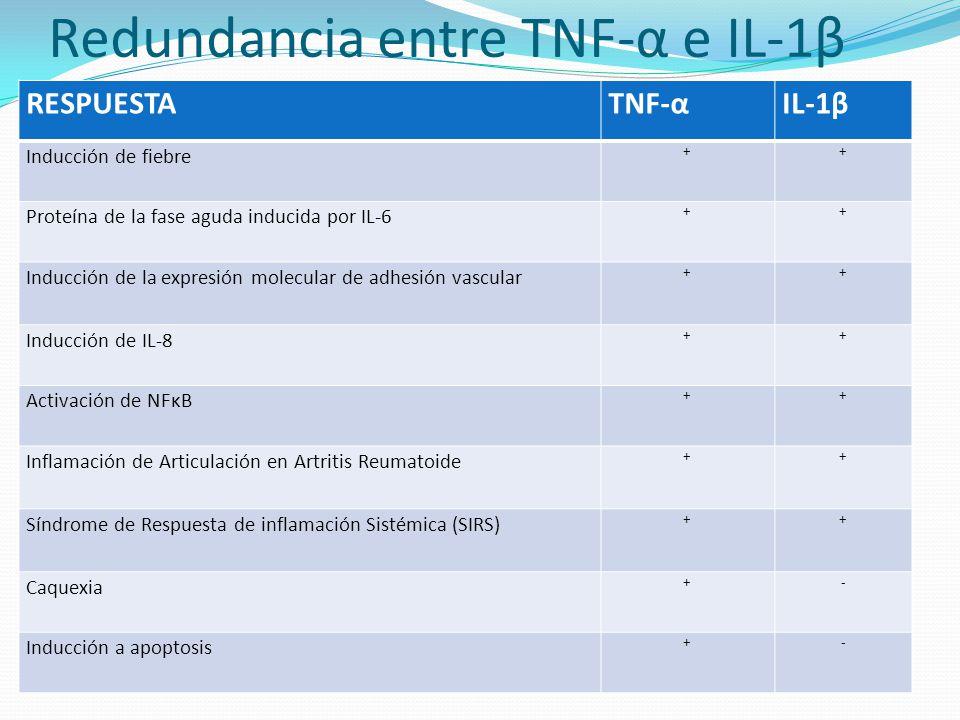Redundancia entre TNF-α e IL-1β