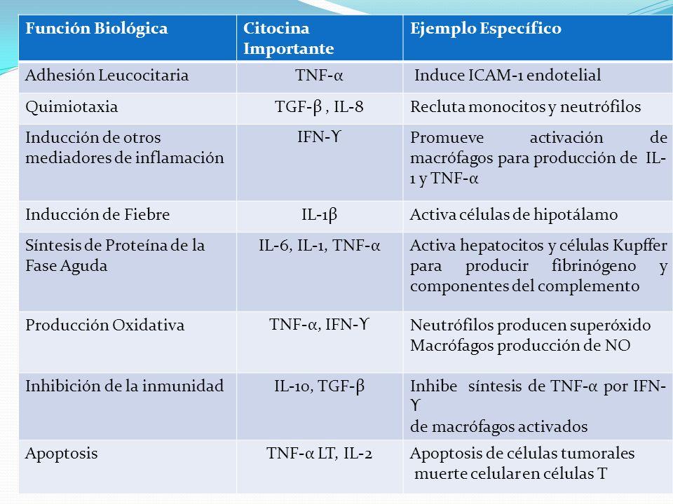 Función Biológica Citocina Importante. Ejemplo Específico. Adhesión Leucocitaria. TNF-α. Induce ICAM-1 endotelial.