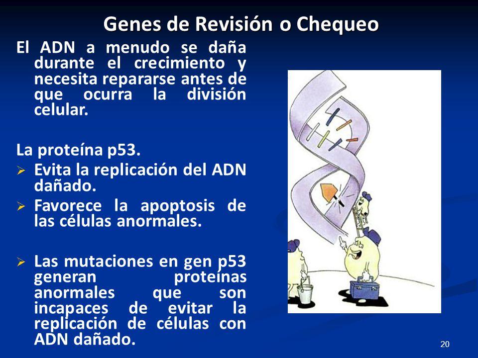 Genes de Revisión o Chequeo