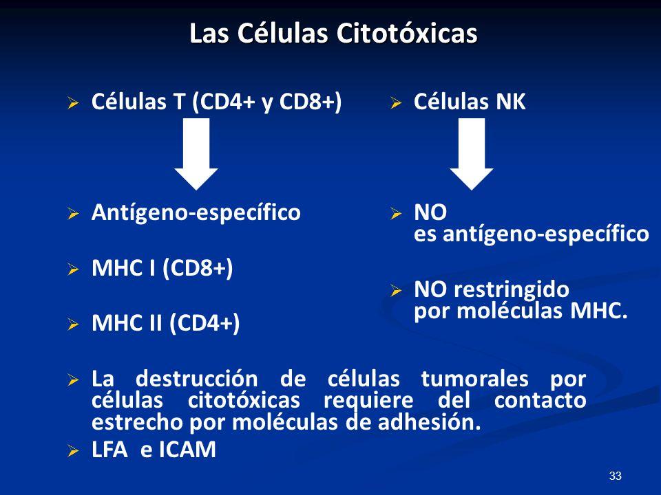 Las Células Citotóxicas