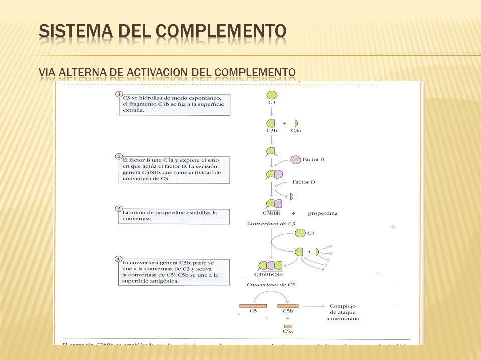 SISTEMA DEL COMPLEMENTO VIA ALTERNA DE ACTIVACION DEL COMPLEMENTO