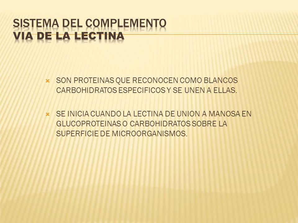 SISTEMA DEL COMPLEMENTO VIA DE LA LECTINA