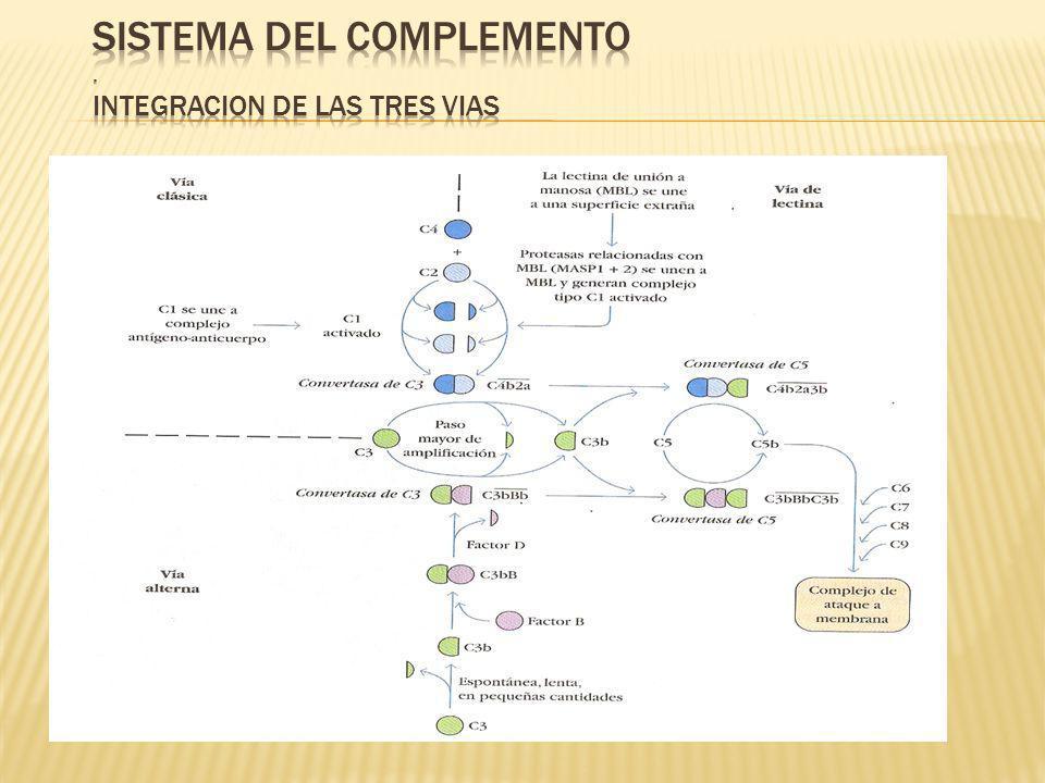 SISTEMA DEL COMPLEMENTO . INTEGRACION DE LAS TRES VIAS