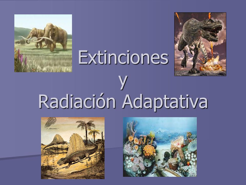 Extinciones y Radiación Adaptativa