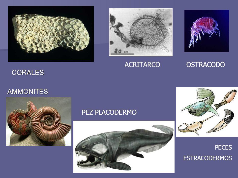ACRITARCO OSTRACODO CORALES AMMONITES PEZ PLACODERMO PECES