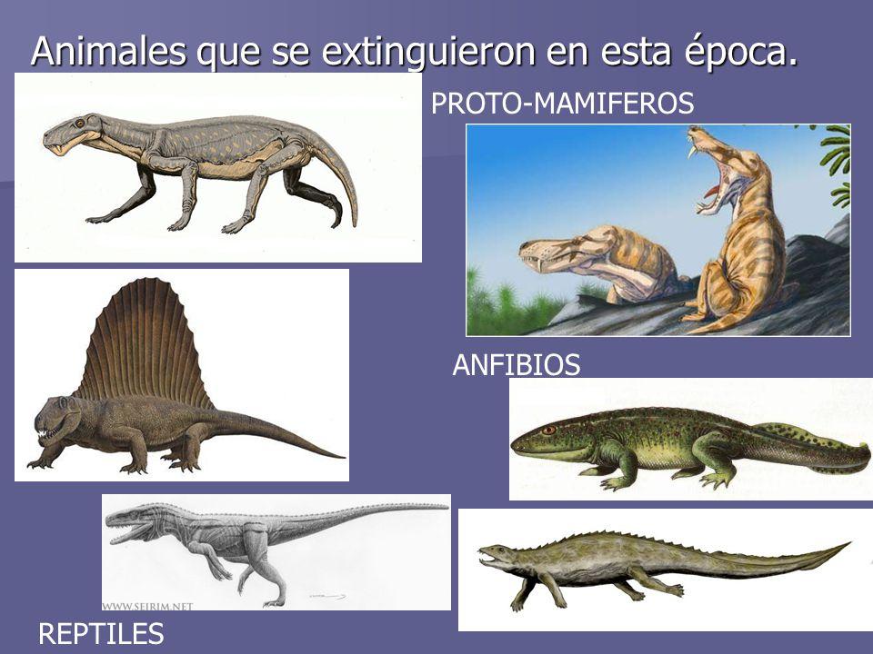 Animales que se extinguieron en esta época.