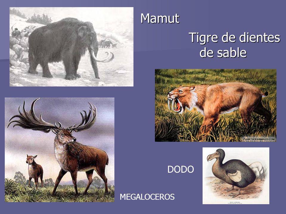 Tigre de dientes de sable Mamut
