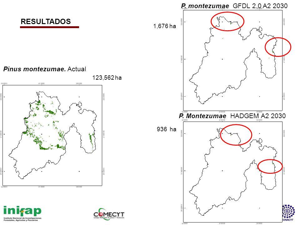 RESULTADOS P. montezumae GFDL 2.0 A2 2030 Pinus montezumae. Actual