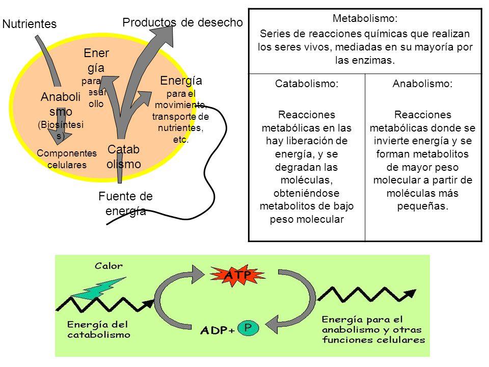 Anabolismo (Biosíntesis)