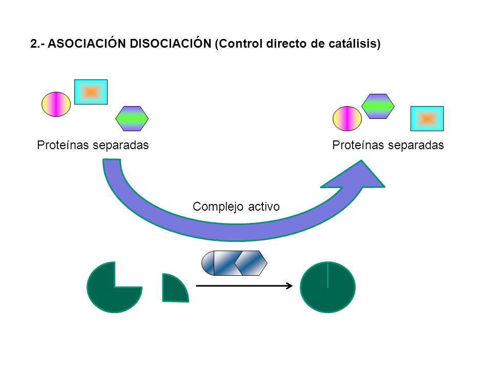 Proteínas separadas Proteínas separadas