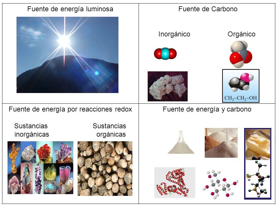 Fuente de energía luminosa Fuente de Carbono
