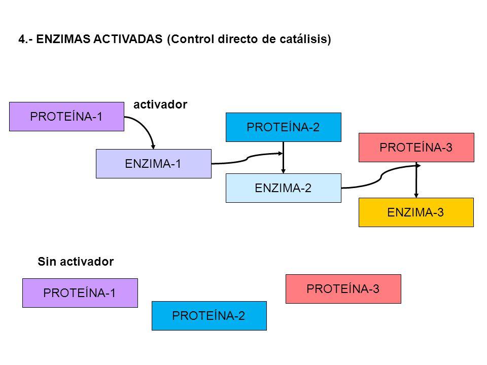4.- ENZIMAS ACTIVADAS (Control directo de catálisis)