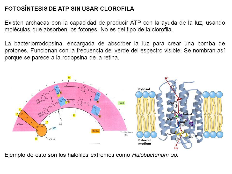 FOTOSÍNTESIS DE ATP SIN USAR CLOROFILA