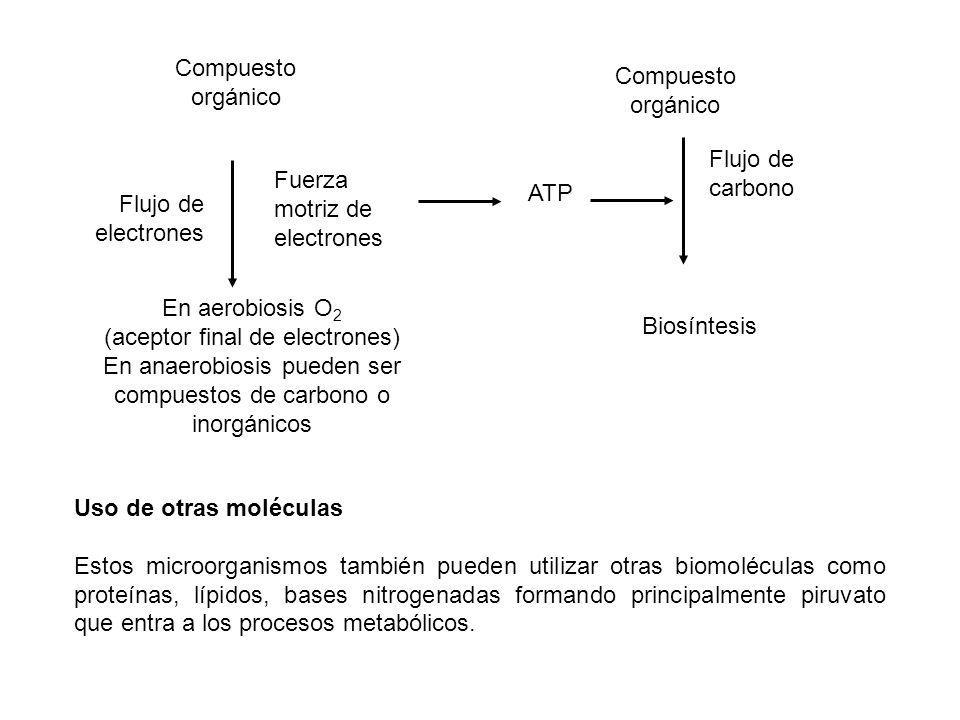 (aceptor final de electrones)