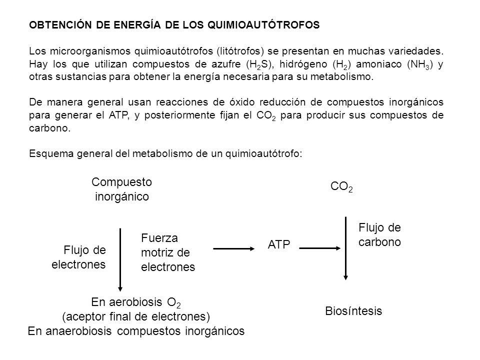 (aceptor final de electrones) En anaerobiosis compuestos inorgánicos