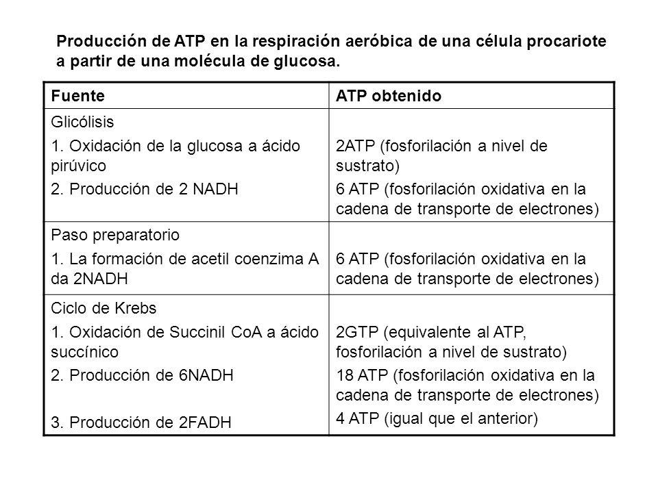 Producción de ATP en la respiración aeróbica de una célula procariote a partir de una molécula de glucosa.