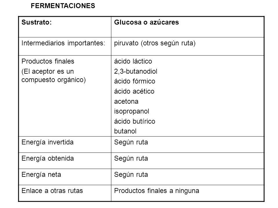 FERMENTACIONES Sustrato: Glucosa o azúcares. Intermediarios importantes: piruvato (otros según ruta)