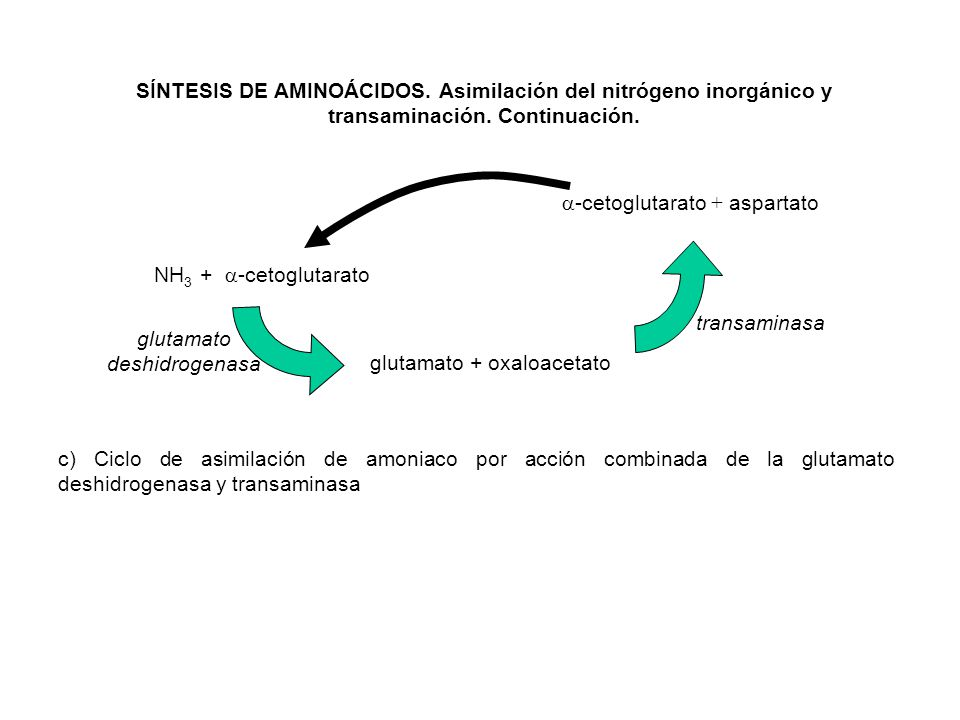 glutamato deshidrogenasa