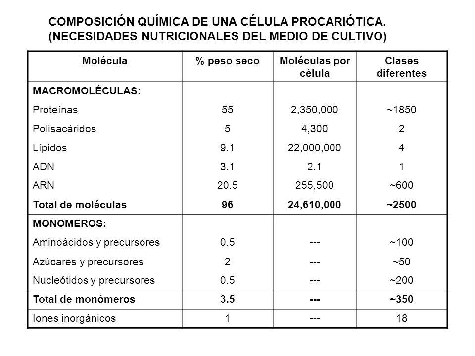 COMPOSICIÓN QUÍMICA DE UNA CÉLULA PROCARIÓTICA
