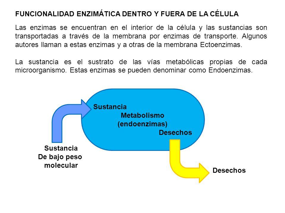 FUNCIONALIDAD ENZIMÁTICA DENTRO Y FUERA DE LA CÉLULA
