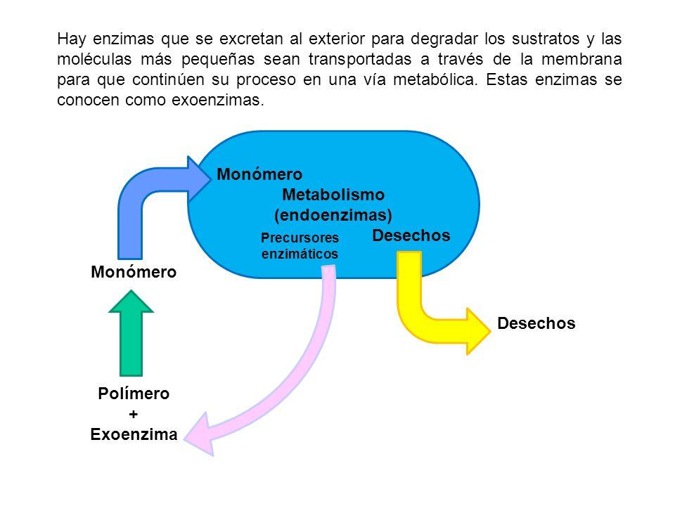 Precursores enzimáticos