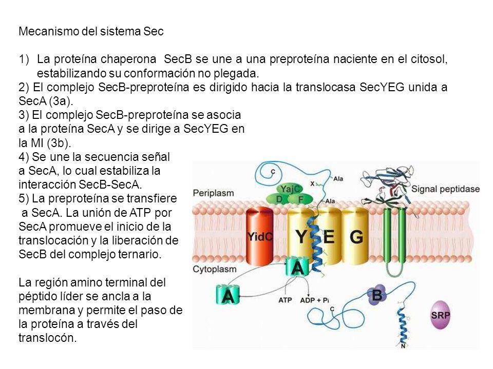 Mecanismo del sistema Sec