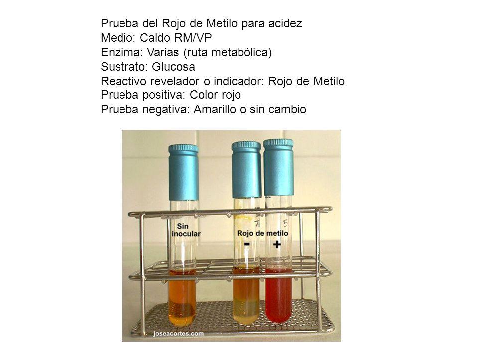 Prueba del Rojo de Metilo para acidez
